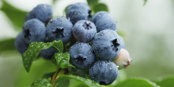 Slideshow: Six Antioxidants on the Rise