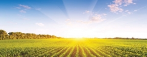 How to Navigate Non-GMO Verification