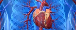 The Global Heart Health Market