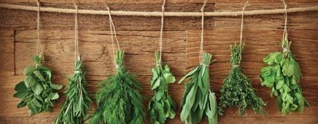 Botanical Boom