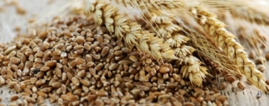 Soluble Wheat Bran Extract Offers Digestive Support