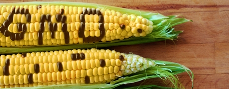 The Great GMO Debate