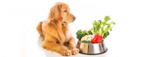 From Farm to … Pet Food