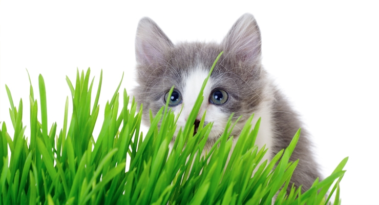 Natural Approaches to Pet Nutrition